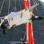 pilot whale transfer10182014_1542