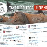 Take The Pledge NOT To Buy A Ticket To A Dolphin Show