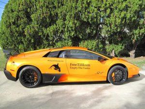 Pettifor's Lamborghini/Jan Pettifor