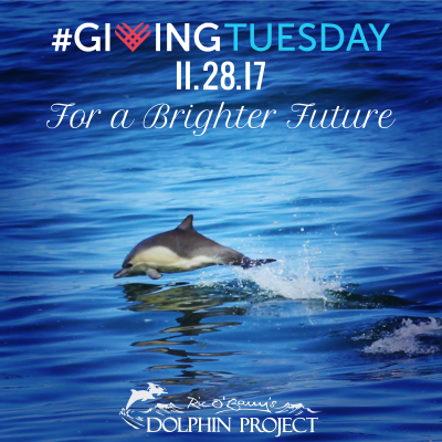 Giving Tuesday 2017 Dolphin Project