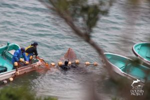 Taiji, Japan Dolphin Slaughter