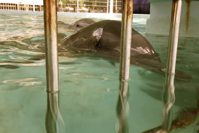 One Dolphin's Story – Gabrielle/Echo