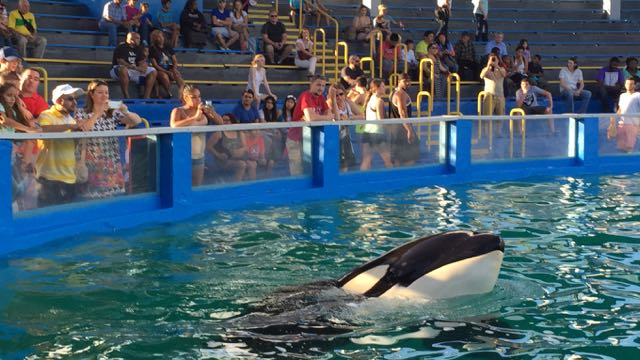 My Experience in Miami Fighting for Lolita