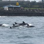 Image: Cetacean Research Center