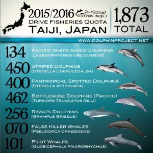 2015/16 Taiji Dolphin Quota