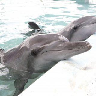 Say NO to Dolphin Captivity!