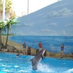Dolphin show at Six Flags Discovery Park/Wikimedia/Public Domain.