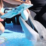 "•	Beetle was one of the main participants of The Mirage's ""Paint With a Dolphin Program/Free the Mojave Dolphins"