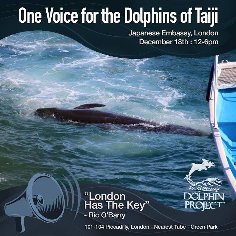 Ten Thousand Voices Needed for the Dolphins