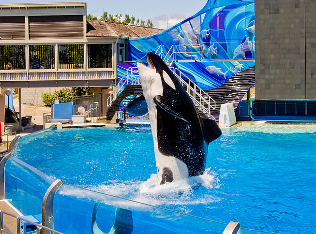 SeaWorld: The Beginning of the End for Orca Shows