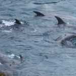 Taiji, Japan, The Cove, Bottlenose Dolphins, Dolphin Hunting, Captivity, Dolphin Slaughter