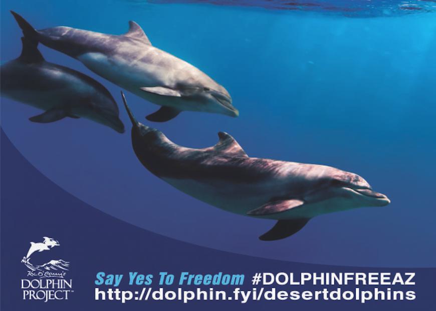 #DolphinFreeAZ