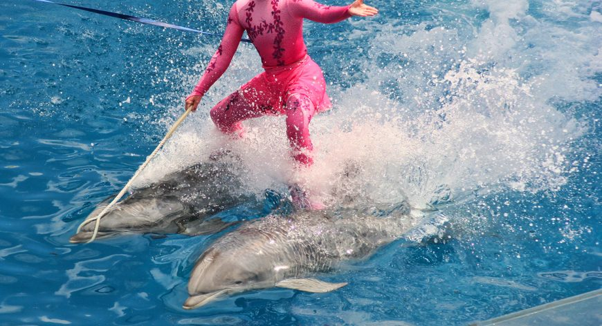 SeaWorld, Blackfish, Captivity, Killer Whales, Orcas, Blackfish, Joel Manby
