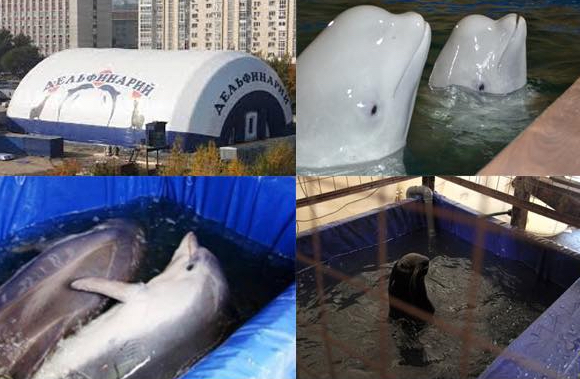 BREAKING: Russia to ban traveling dolphin shows and contact zoos