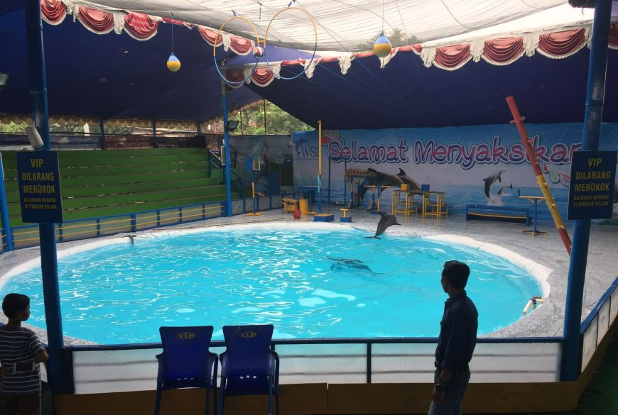 Indonesia's Traveling Dolphin Circuses