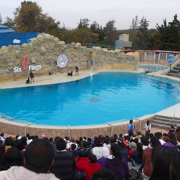 BREAKING: Adios to Dolphin Shows in Mexico City