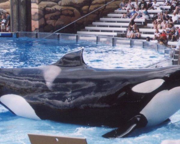 BREAKING: SeaWorld Tanks in 2Q and 1st Half 2017 Results