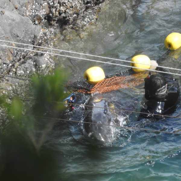 Migrating Family of Risso's Dolphins Slaughtered in The Cove