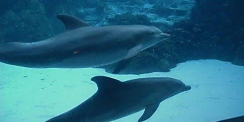 another dead dolphin at dolphinaris arizona - Dolphin Pics