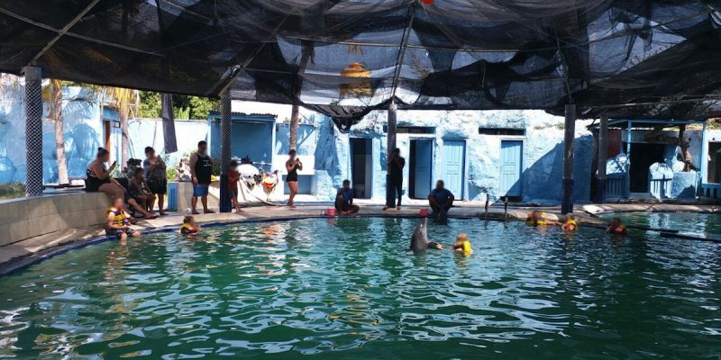 Melka hotel swim-with-dolphins program