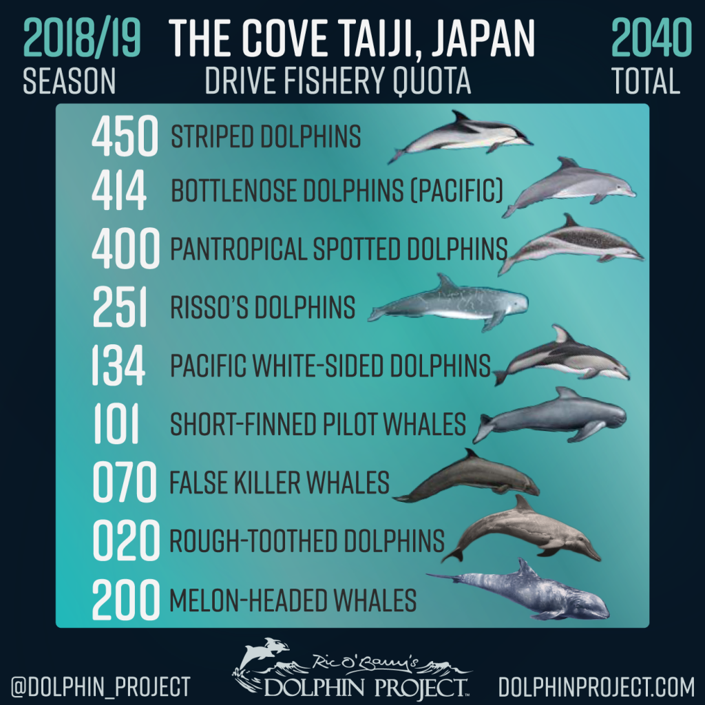 Taiji Facts Frequently Asked Questions Dolphin Project About The Very Large Array 2018 19 Drive Hunt Season Quota Cove Japan
