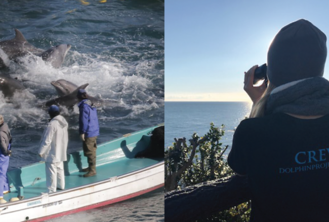 Dolphin Project's Return to the Cove