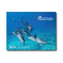 2019 Dolphin Project Calendar cover